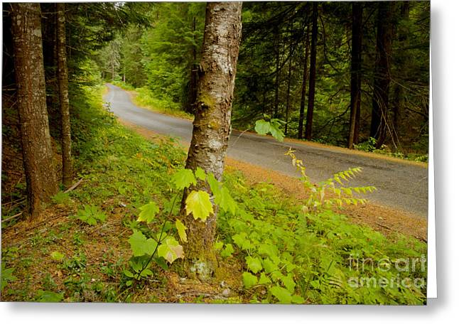 Mountain Road Greeting Cards - Forest Escape Greeting Card by Idaho Scenic Images Linda Lantzy