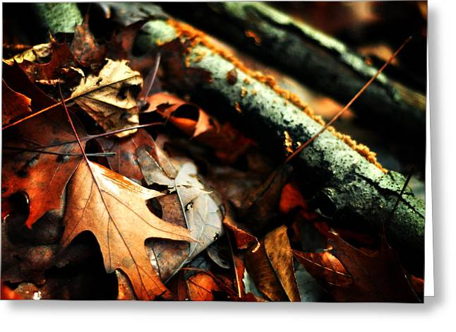 Forest Fade Away Greeting Card by Rebecca Sherman