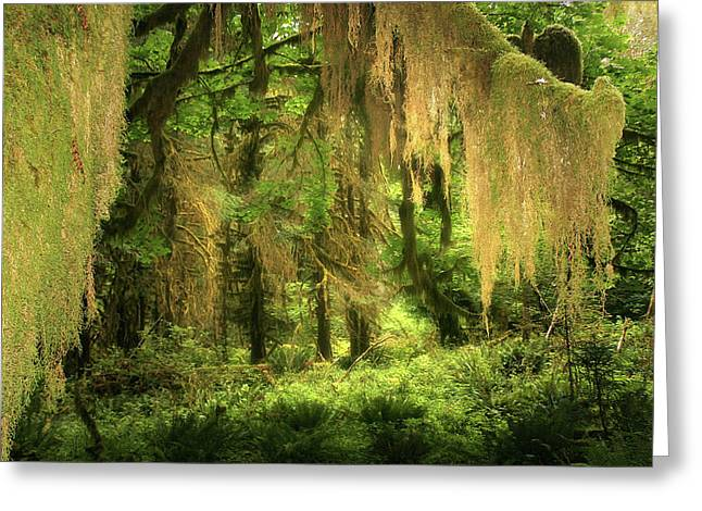 Hazy Days Greeting Cards - Forest Fantasy - Quinault - Gateway to Paradise on the Olympic Peninsula WA Greeting Card by Christine Till
