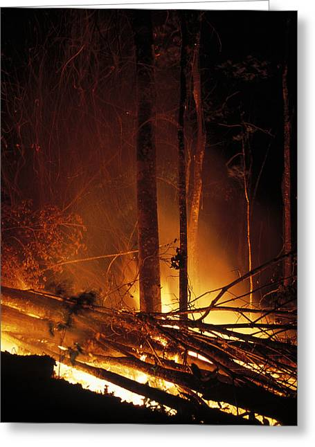 Deforestation Greeting Cards - Forest Fire Greeting Card by Dr Morley Read