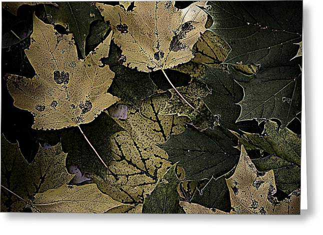 Forest Floor Greeting Cards - Forest Floor - Leaf 13 Greeting Card by Pete Hellmann