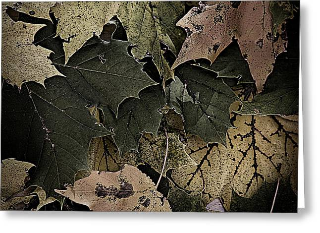 Forest Floor Greeting Cards - Forest Floor - Leaf 14 Greeting Card by Pete Hellmann