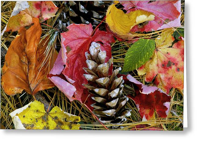 Gatlinburg Tennessee Greeting Cards - Forest Floor Portrait Greeting Card by Rich Franco
