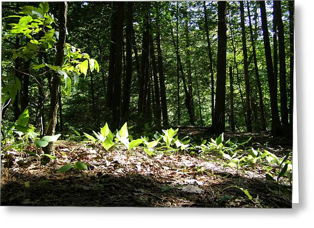 Manitoulin Greeting Cards - Forest Greenery Greeting Card by Patricia Drohan