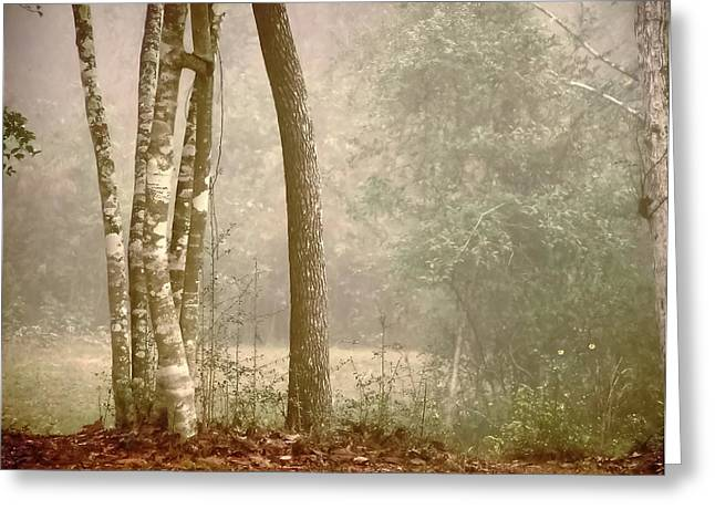 Forest In Fog Greeting Card by Robert Brown