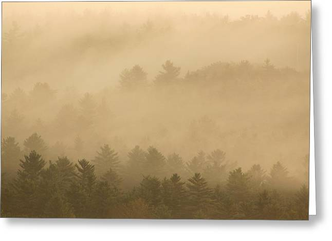 Forest In The Fog Greeting Card by John Burk