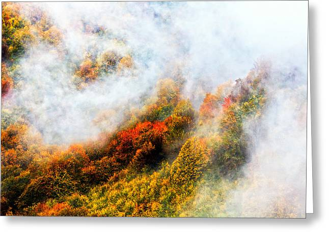 Balkan Greeting Cards - Forest in Veil of Mists Greeting Card by Evgeni Dinev