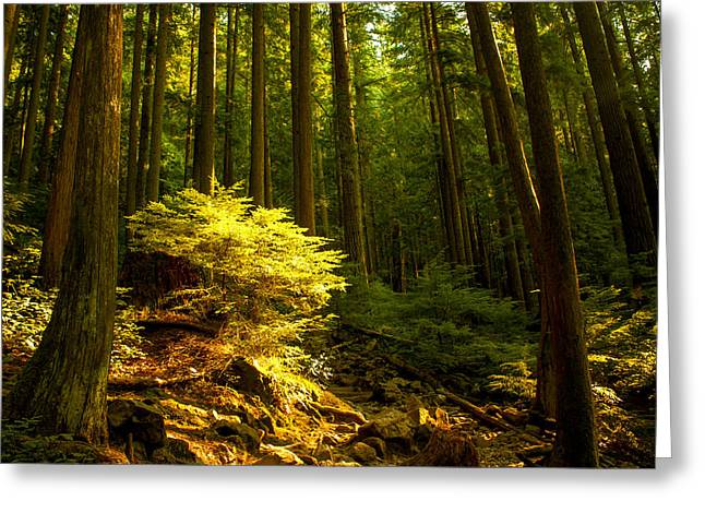 Vancouver Greeting Cards - Forest Greeting Card by Matt  Trimble