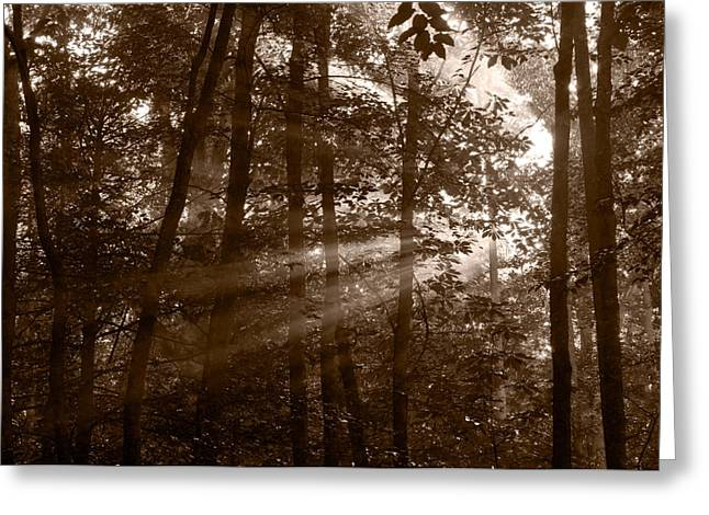 Smoky Greeting Cards - Forest Mist B and W Greeting Card by Steve Gadomski