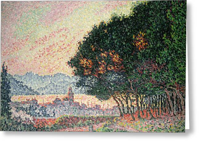 St.tropez Greeting Cards - Forest near St Tropez Greeting Card by Paul Signac