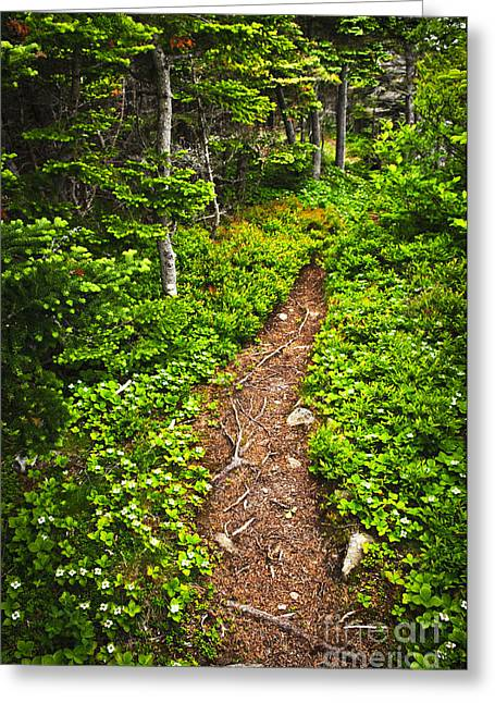 Recreational Park Greeting Cards - Forest path in Newfoundland Greeting Card by Elena Elisseeva