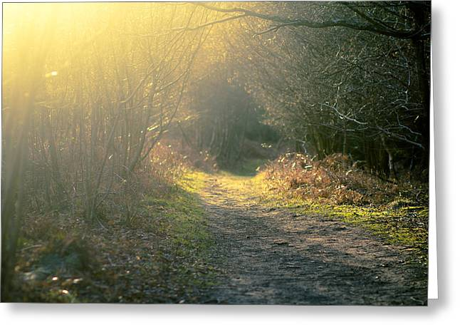 Forest Path Greeting Card by Justin Albrecht
