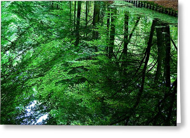Reflective Greeting Cards - Forest Reflection Greeting Card by Dave Bowman