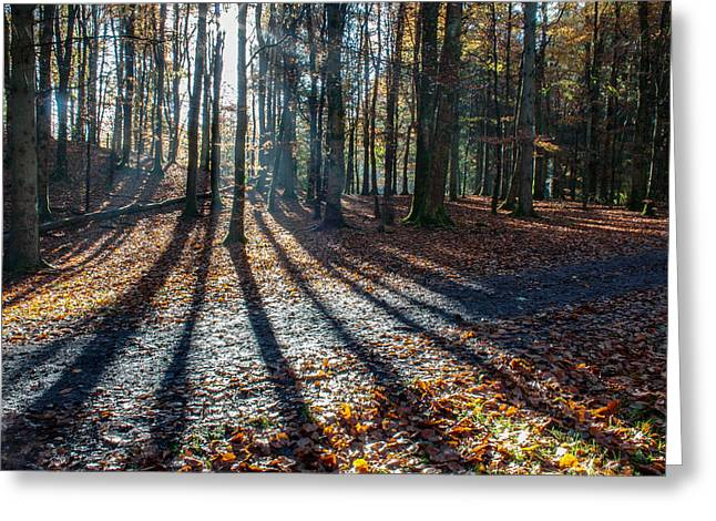 Ecologic Greeting Cards - Forest Shadows Greeting Card by Semmick Photo