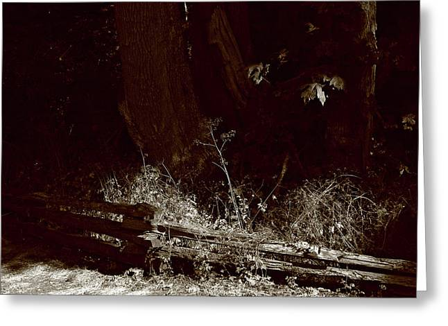 Split Rail Fence Greeting Cards - Forest Spotlight Greeting Card by Lorraine Devon Wilke