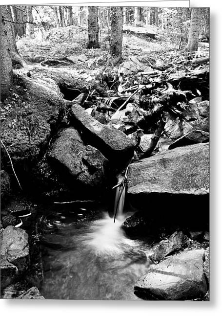 Framed. Giclee Greeting Cards - Forest Stream in Black and White Greeting Card by James BO  Insogna