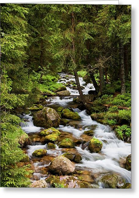 Beautiful Creek Photographs Greeting Cards - Forest Stream in Tatra Mountains Greeting Card by Artur Bogacki