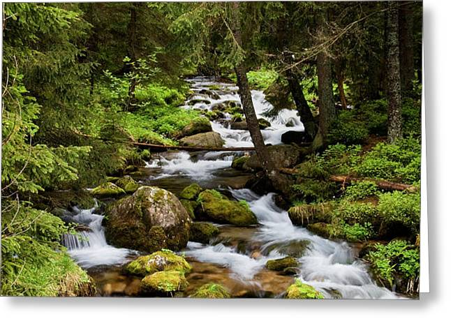 Forest Stream in Tatra Mountains Greeting Card by Artur Bogacki