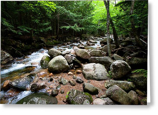 Jason Smith Greeting Cards - Forest Stream Greeting Card by Jason Smith