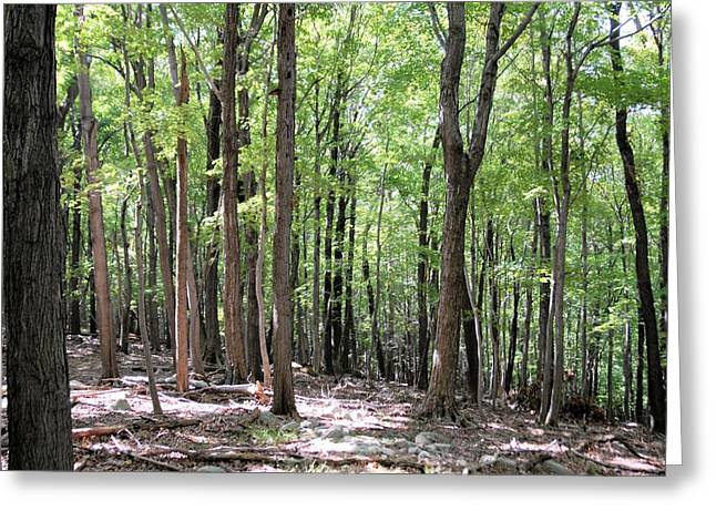 Forest through the Trees Greeting Card by