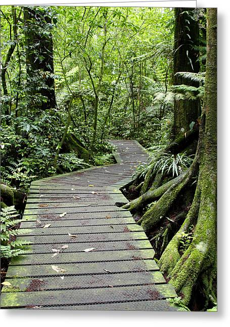 Boardwalk Greeting Cards - Forest trail Greeting Card by Les Cunliffe