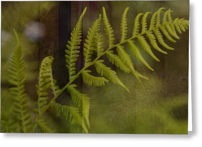 Photo Montage Greeting Cards - Forest Treasures Greeting Card by Bonnie Bruno