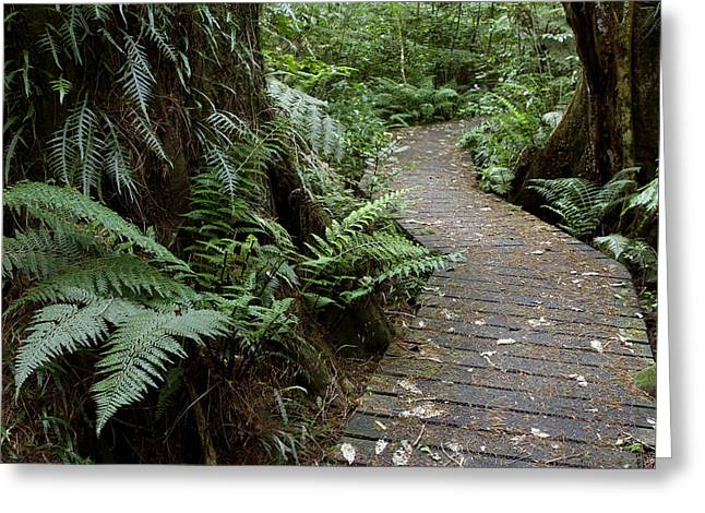 Boardwalk Greeting Cards - Forest walk Greeting Card by Les Cunliffe