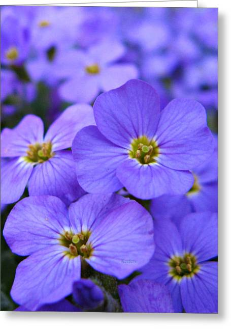 Oregon Flowers Greeting Cards - Forever Blue Greeting Card by Cathie Tyler