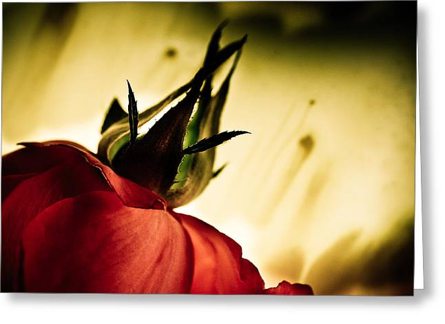 Rose Petals Greeting Cards - Forever Greeting Card by Bobby Villapando