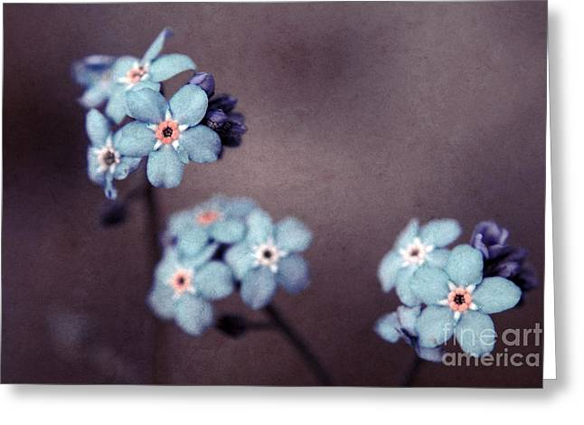 """forget Me Not"" Greeting Cards - Forget Me Not 01 - s05dt01 Greeting Card by Variance Collections"