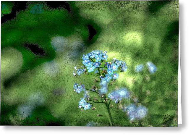 """forget Me Not Flowers"" Greeting Cards - Forget-me-not Grunge Greeting Card by Darren Fisher"
