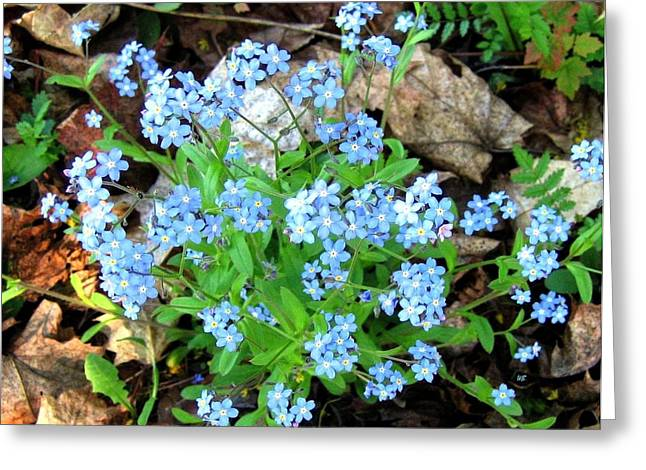 Forgotten Greeting Cards - Forget-Me-Not Greeting Card by Will Borden