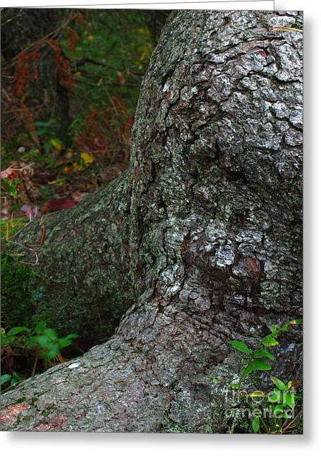 Tree Roots Greeting Cards - Forms in Nature Greeting Card by Juergen Roth