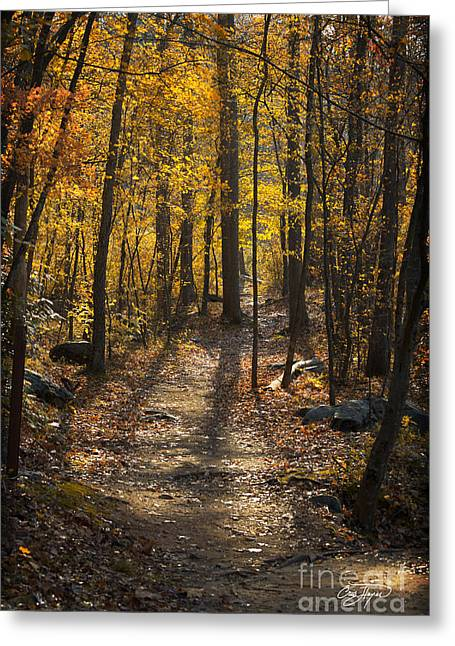 Cris Hayes Greeting Cards - Forrest of Gold Greeting Card by Cris Hayes
