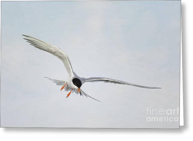 Tern Digital Greeting Cards - Forsters Tern Upon Cirrus Skies Greeting Card by Susan Gary