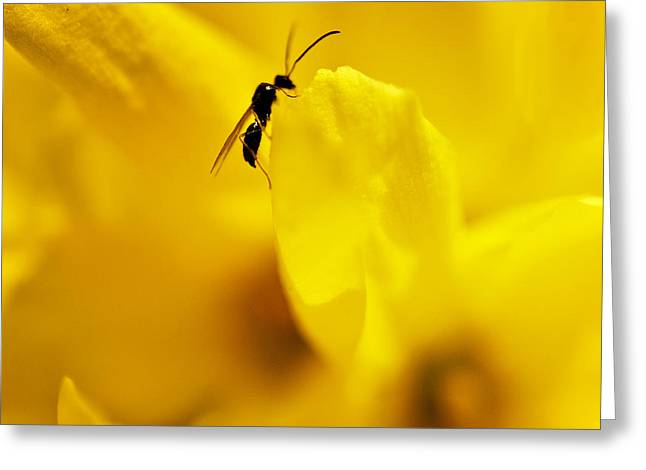 Forsythia Greeting Cards - Forsythia and Friend Greeting Card by Vicki Jauron