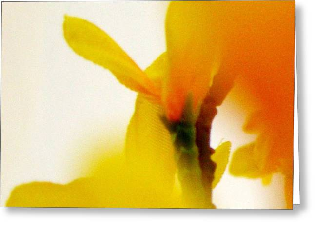 Spring Greeting Cards - Forsythia Greeting Card by Gretchen Wrede