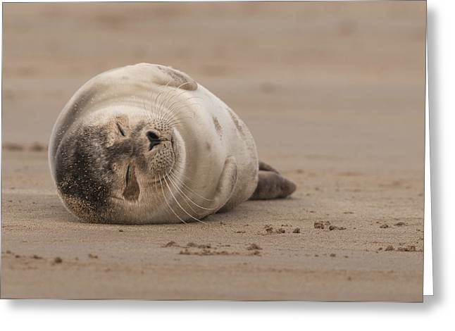 Seal Pup Greeting Cards - Forty Winks Greeting Card by Andy Astbury
