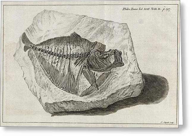 Royal Society Of London Greeting Cards - Fossil Fish, 18th Century Greeting Card by Middle Temple Library