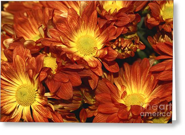 Daisy Greeting Cards - Foulee de Petales - Original Greeting Card by Variance Collections