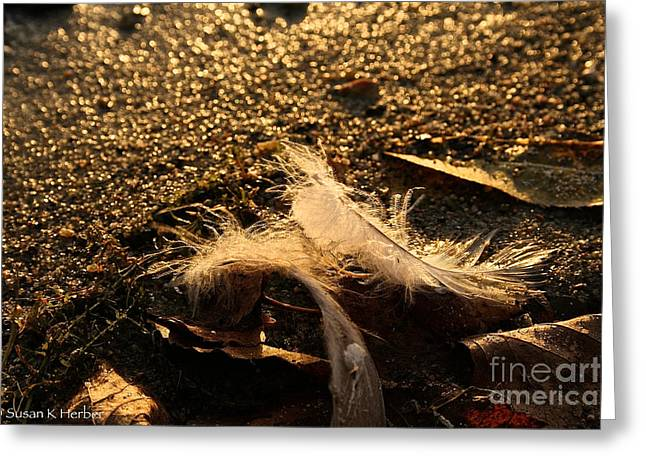 Found Feathers Greeting Card by Susan Herber