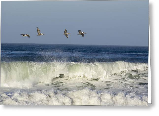 Four Animals Greeting Cards - Four Brown Pelicans Pelecanus Greeting Card by Rich Reid