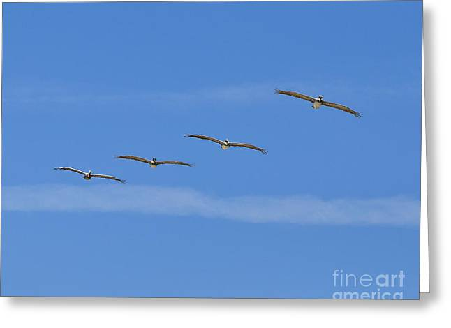 Four Flyers Greeting Card by Al Powell Photography USA