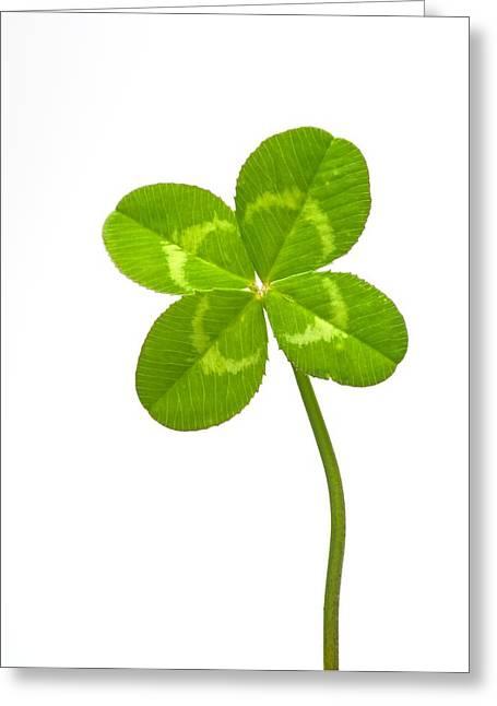 Good Luck Photographs Greeting Cards - Four-leaf Clover Greeting Card by David Nunuk