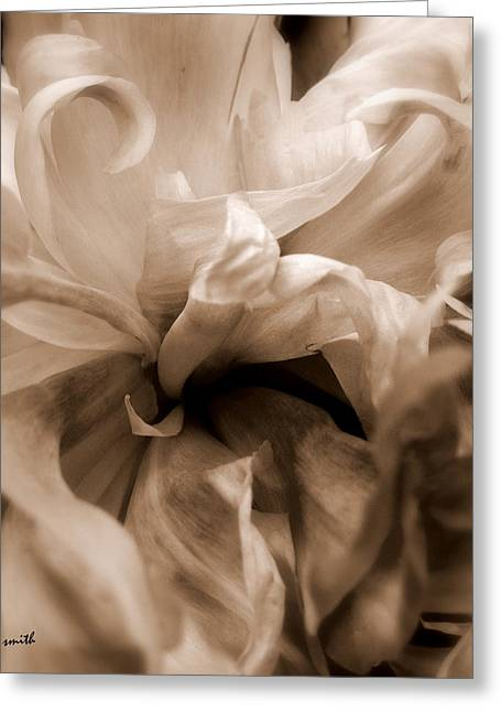 Indiana Flowers Greeting Cards - Four Oclock Greeting Card by Ed Smith