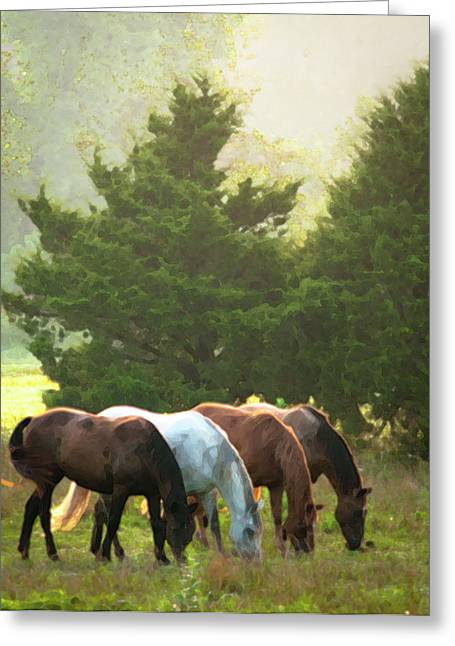 Pasture Scenes Photographs Greeting Cards - Four of a Kind Greeting Card by Ron  McGinnis