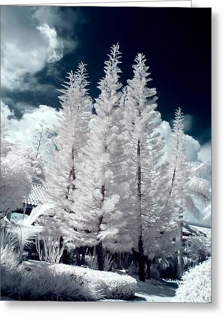 Botanical Beach Greeting Cards - Four Tropical Pines Infrared Greeting Card by Adam Romanowicz