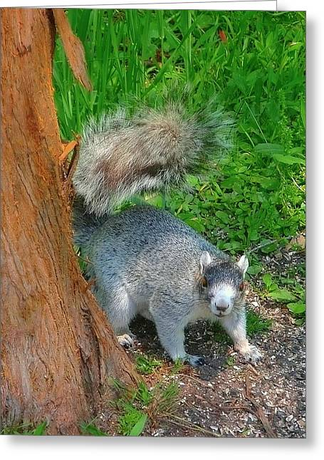 Fox Squirrel Greeting Cards - Fox Squirrel Greetings Greeting Card by Beth Akerman