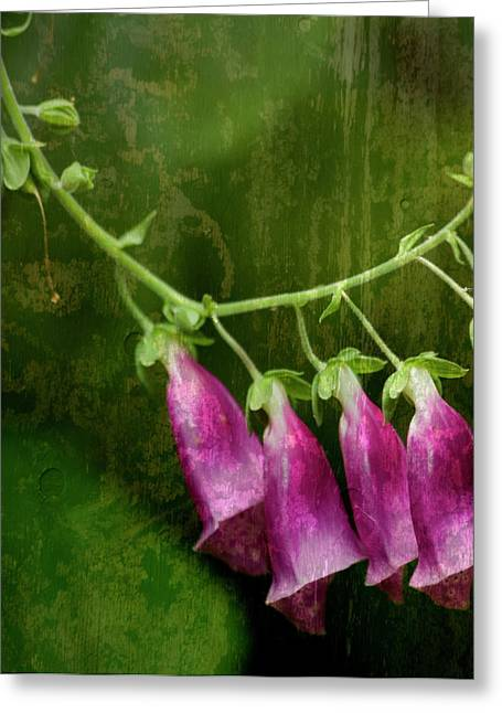 Olive Green Greeting Cards - Foxglove Greeting Card by Bonnie Bruno