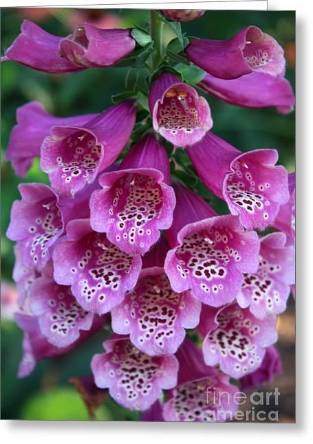 Foxglove Flowers Photographs Greeting Cards - Foxglove Greeting Card by David Bearden